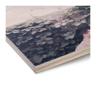 Birch Wood Panels