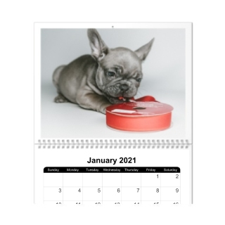 12 Month 8x11 Wall Calendar